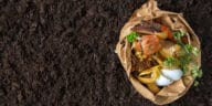 compost hiver