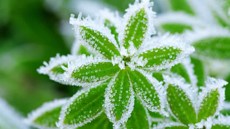 protéger jardin du gel