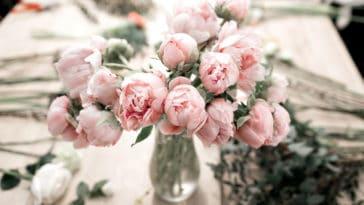 fleurs aspirine