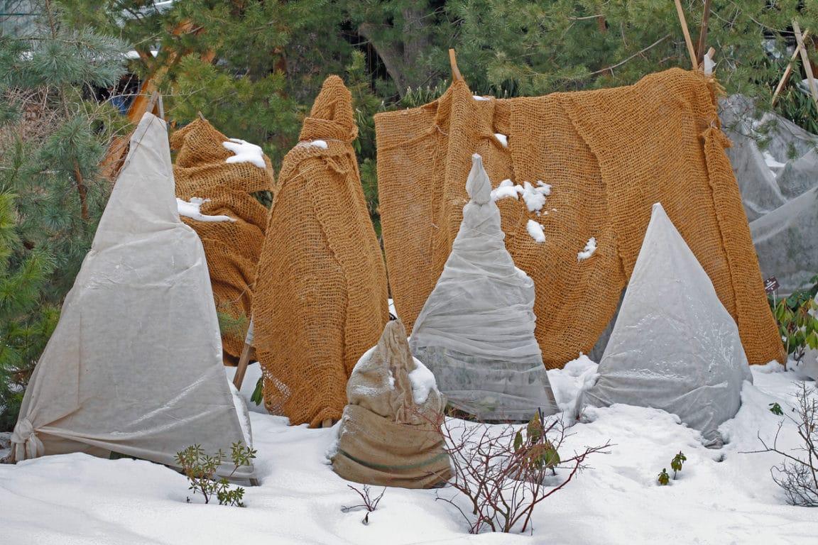 hiver jardin