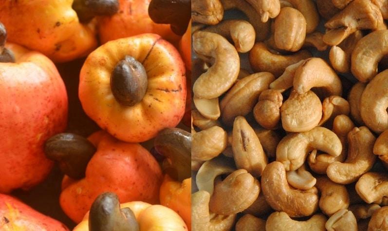noix pomme de cajou