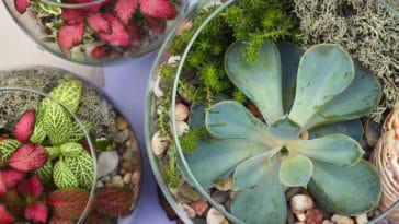 terrarium plantes