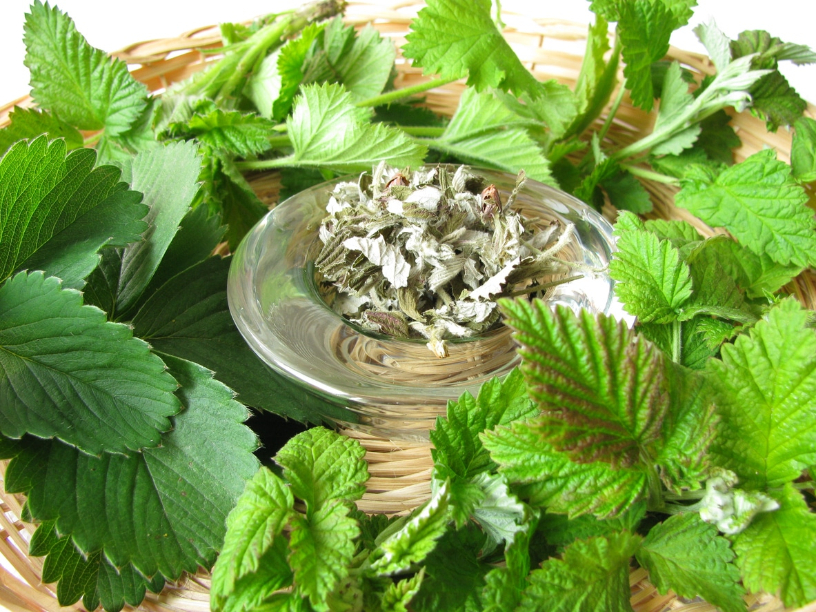 feuille framboisier infusion