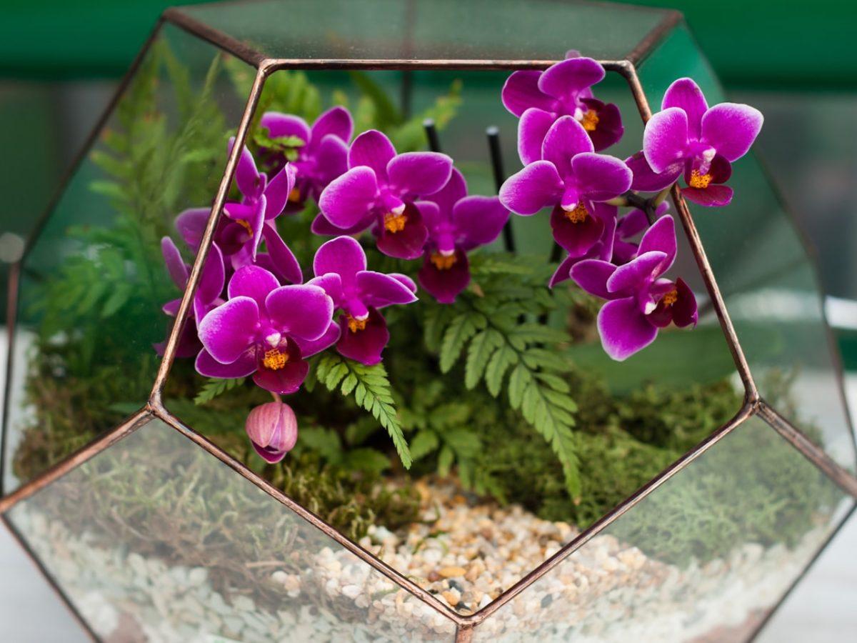 Comment Planter Une Orchidée 6 orchidées qui se plaisent en terrarium
