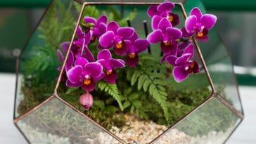 terrarium orchidée