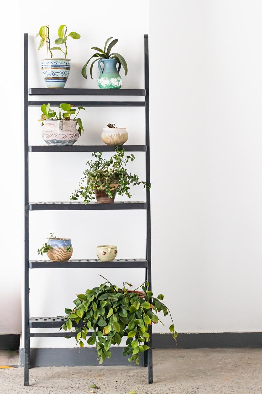 échelle plante décoration