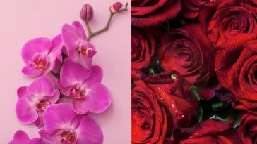 fleurs orchidées roses rouges