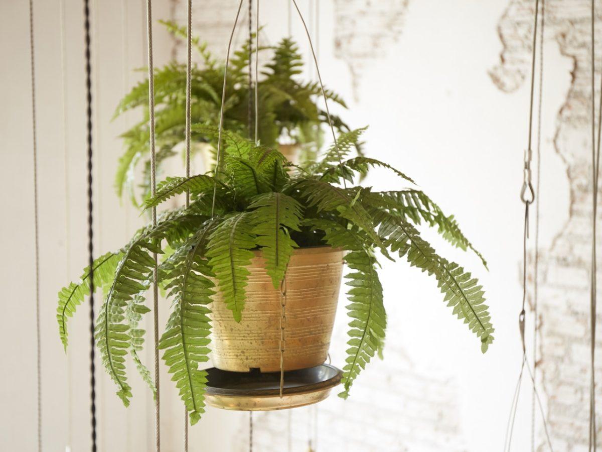 Les Filles De L Air Plante 10 plantes parfaites pour être suspendues à l'intérieur