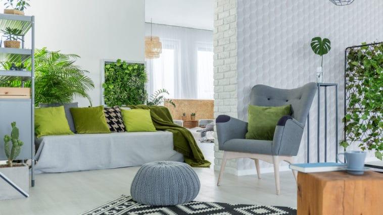 maison plantes intérieures décoration