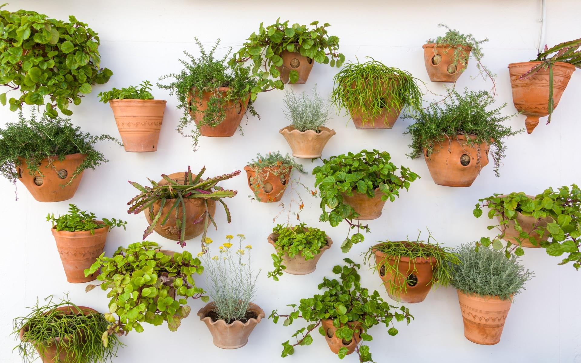 pot fleurs mur