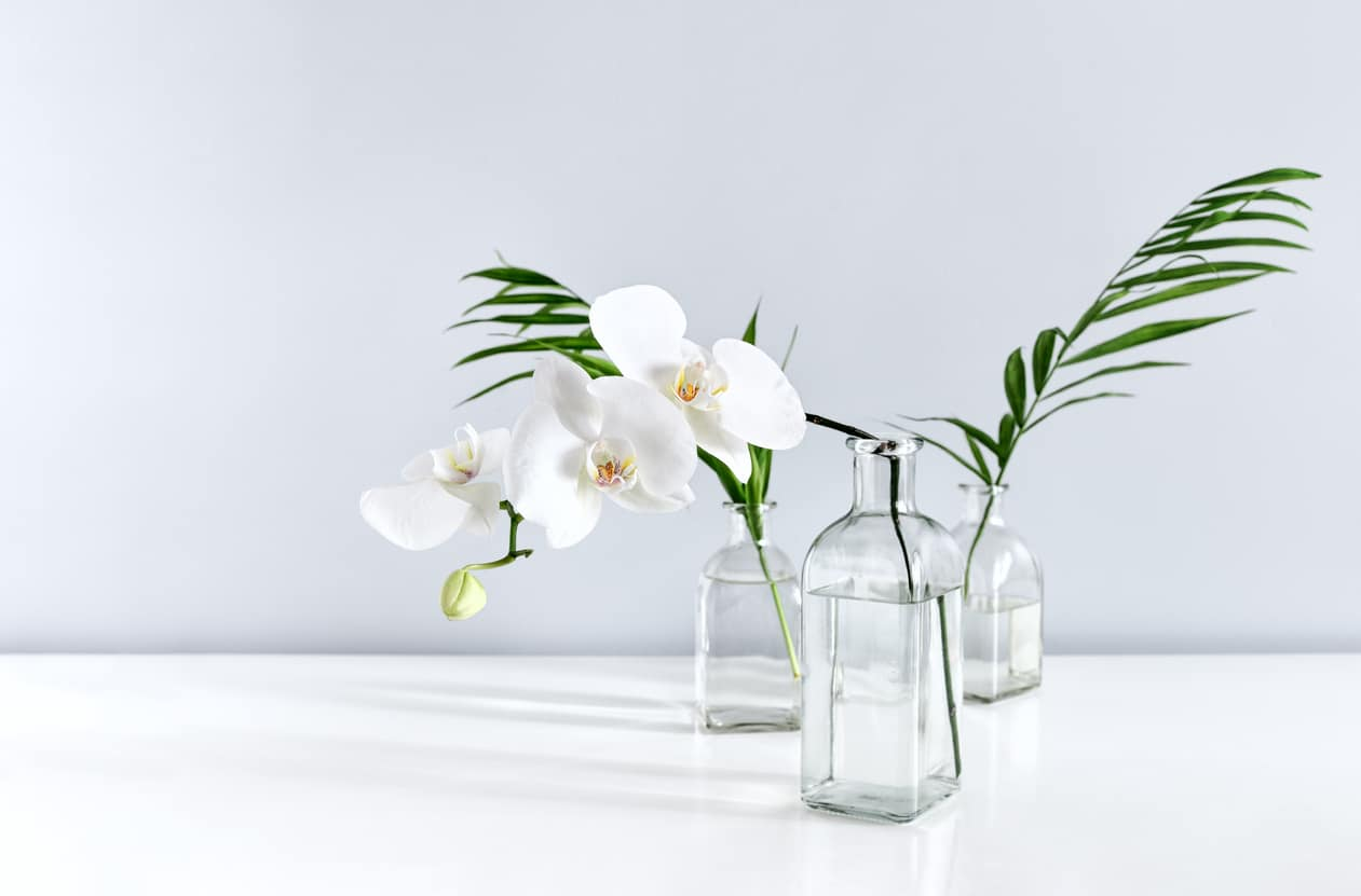 orchidée vase transparant