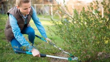 jardiner tailler arbuste