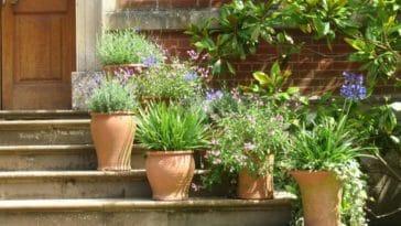 pot terre cuite fleurs