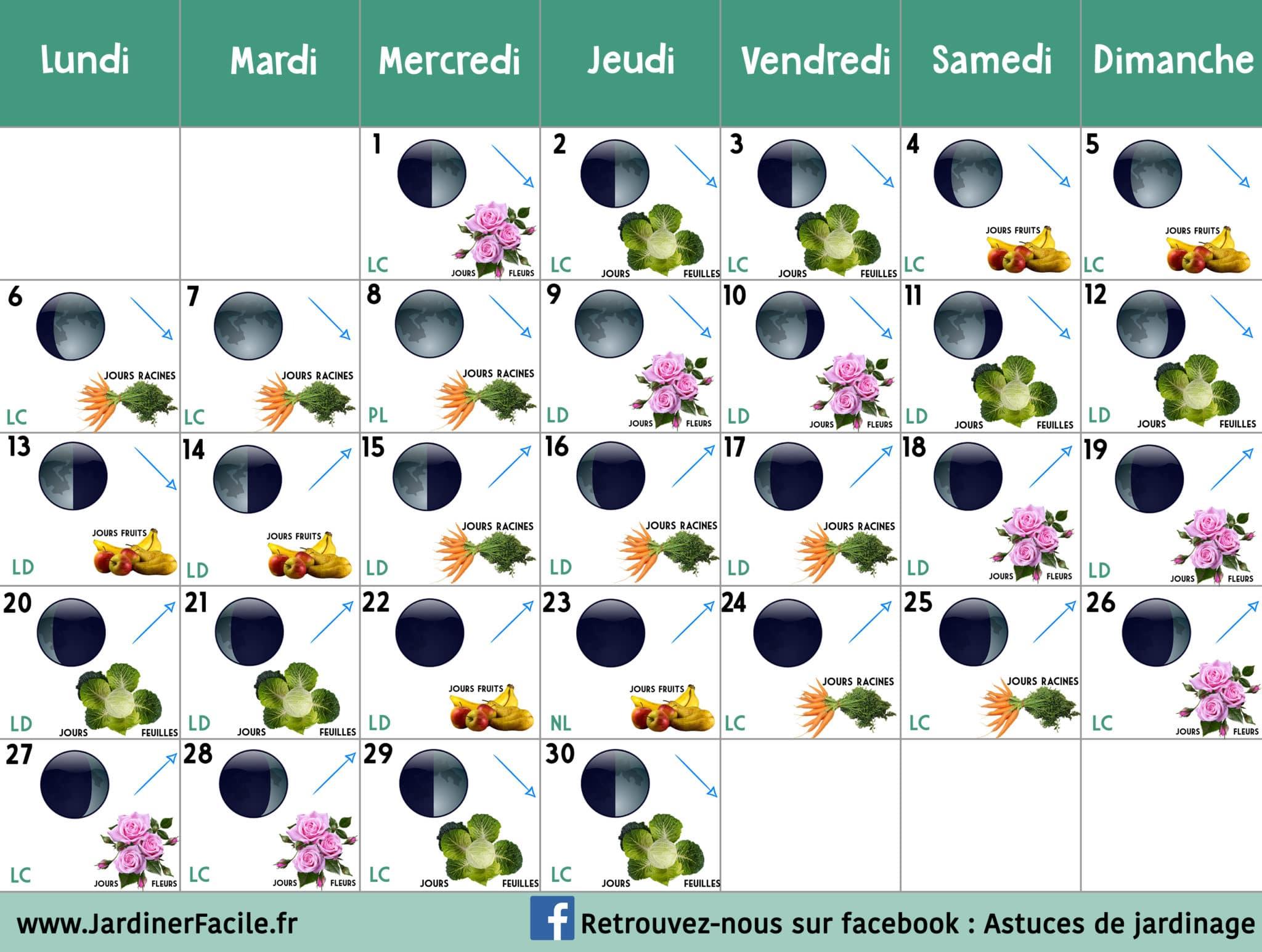 Culture Et Entretien De La Rhubarbe calendrier lunaire avril 2020 : jardiner avec la lune