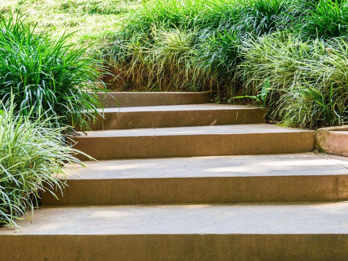 Planter Une Bordure De Buis 10 plantes idéales pour créer une bordure