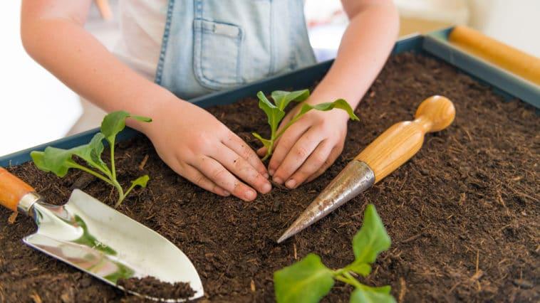 enfant potager jardin planter