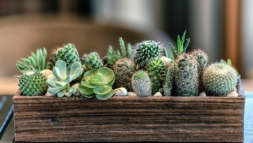 jardiniere cactus succulentes