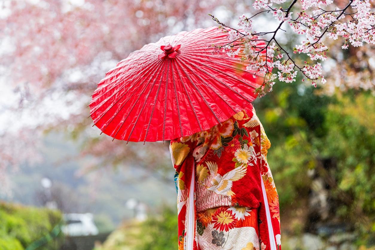 Hanami cerisier