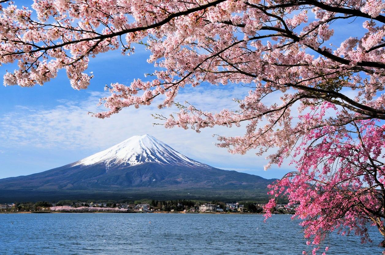 Mont Fuji cerisier