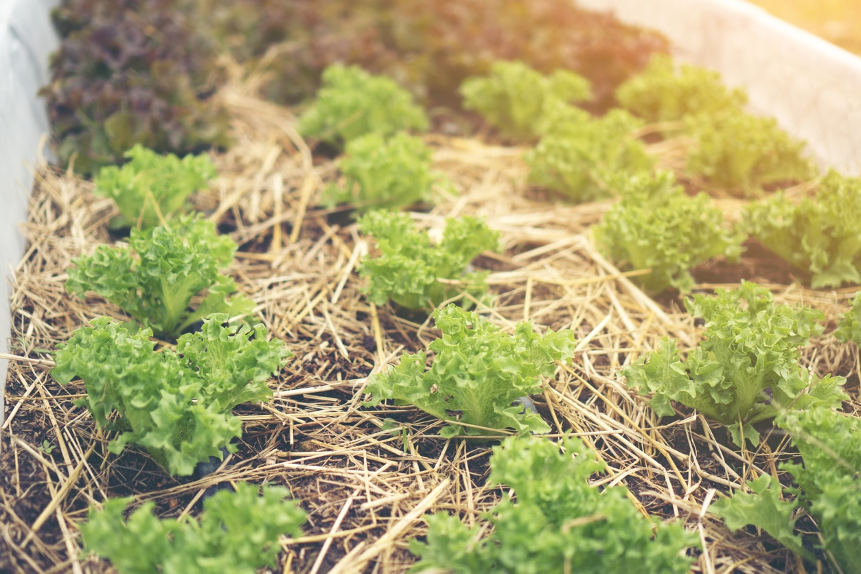 permaculture salades