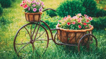 jardin original fleurs velo