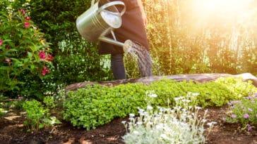arroser plantes potager jardin