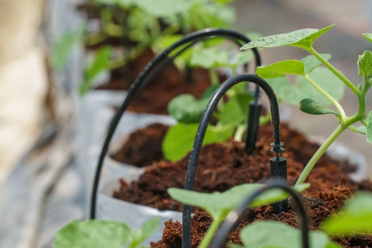 goutte a goutte arroser plantes