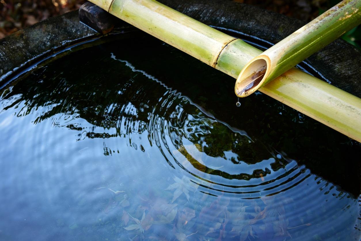 bambou eau jardin