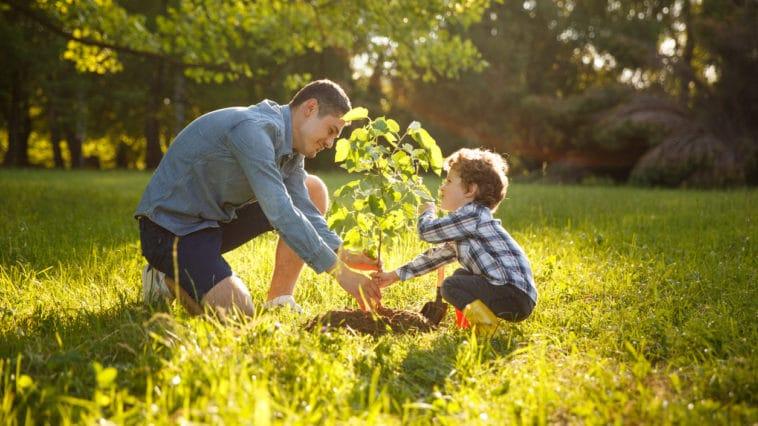 planter jardiner arbre