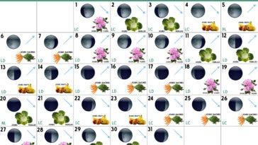 Calendrier lunaire Juillet 2020