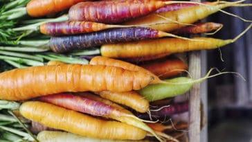 carottes couleurs