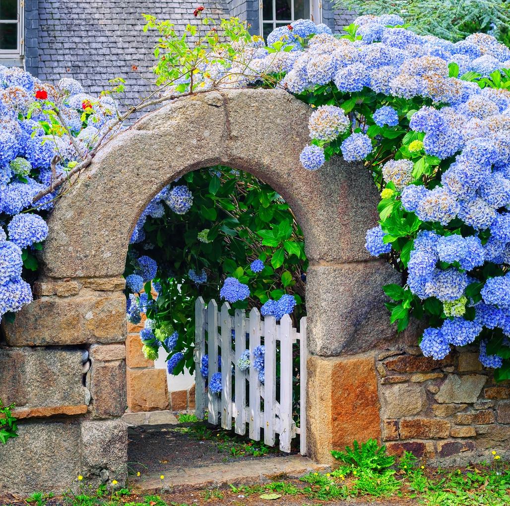 entree maison bretonne hortensia
