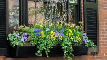jardiniers fleurs rebord fenetre