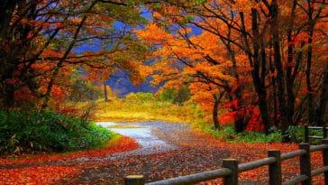 automne arbres