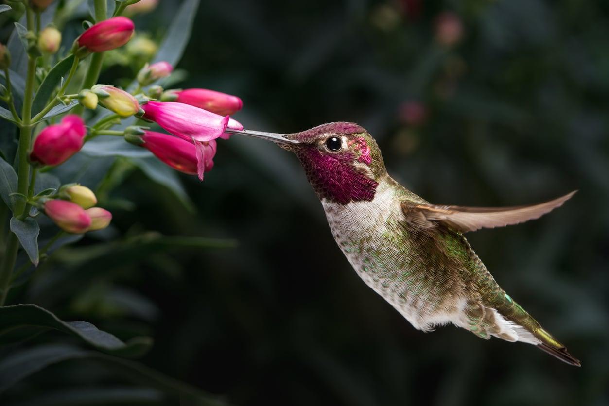 plantes oiseaux insectes animaux papillon