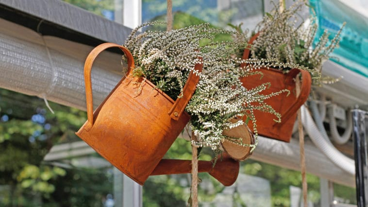 plantes arrosoir