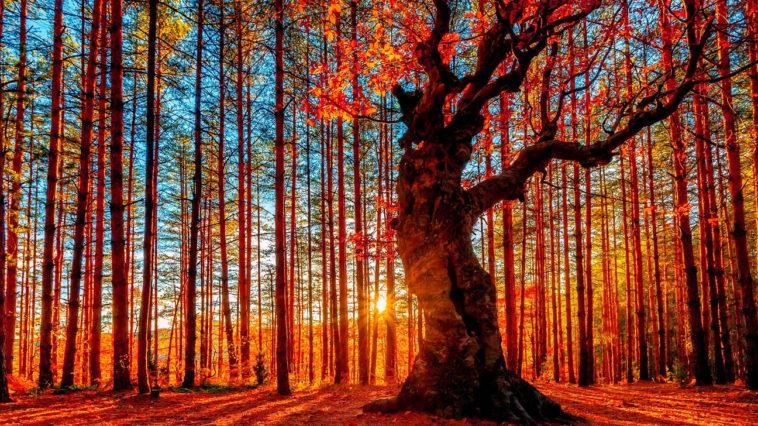 dictons octobre automne