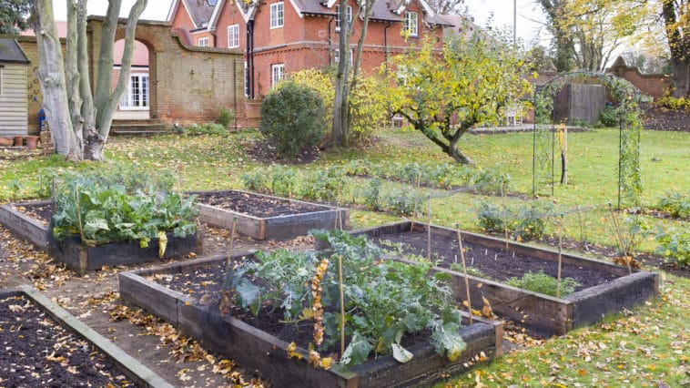 jardin hiver décembre