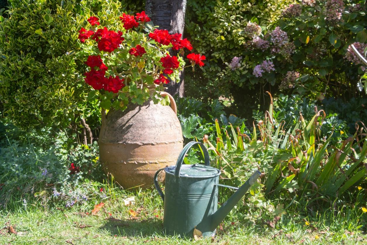 geranium eau