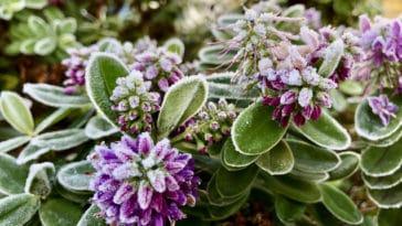 hiver fleurs