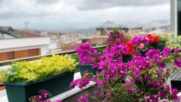 balcon fleurs exposition sud