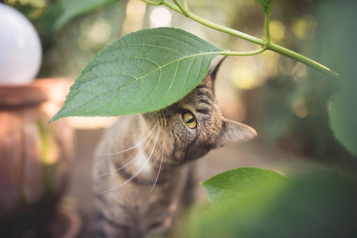 chats plantes