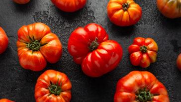 Cœur de bœuf ou tomate cuor di bue