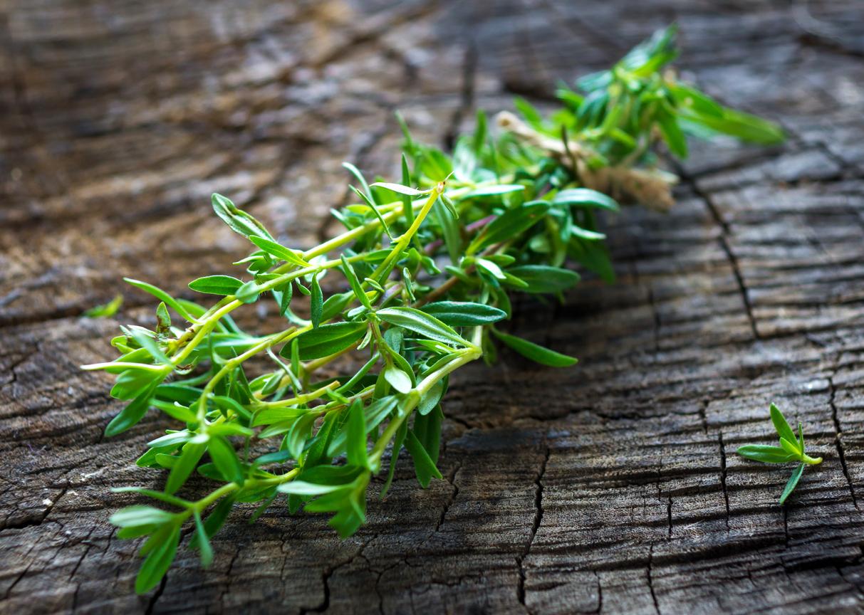 sarriette Satujera hortensis