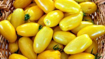 Solanum Lycopersicum tomate banana legs