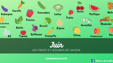 fruits et légumes mois de juin saison