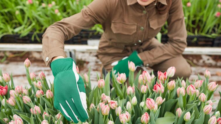jardinage femme jardinière