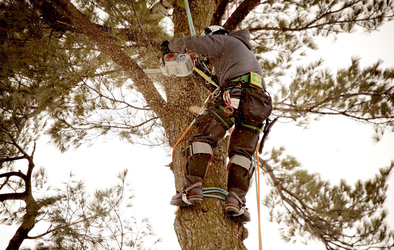 professionnel en train d'élaguer un arbre tailler des branches