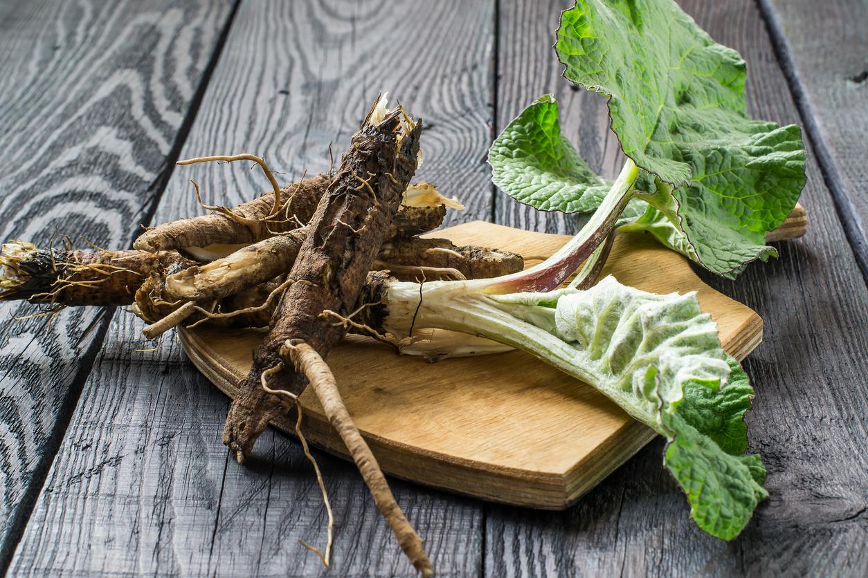 bardane mauvaises herbes comestibles