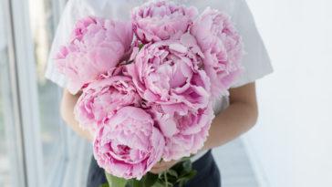 pivoine grosses fleurs